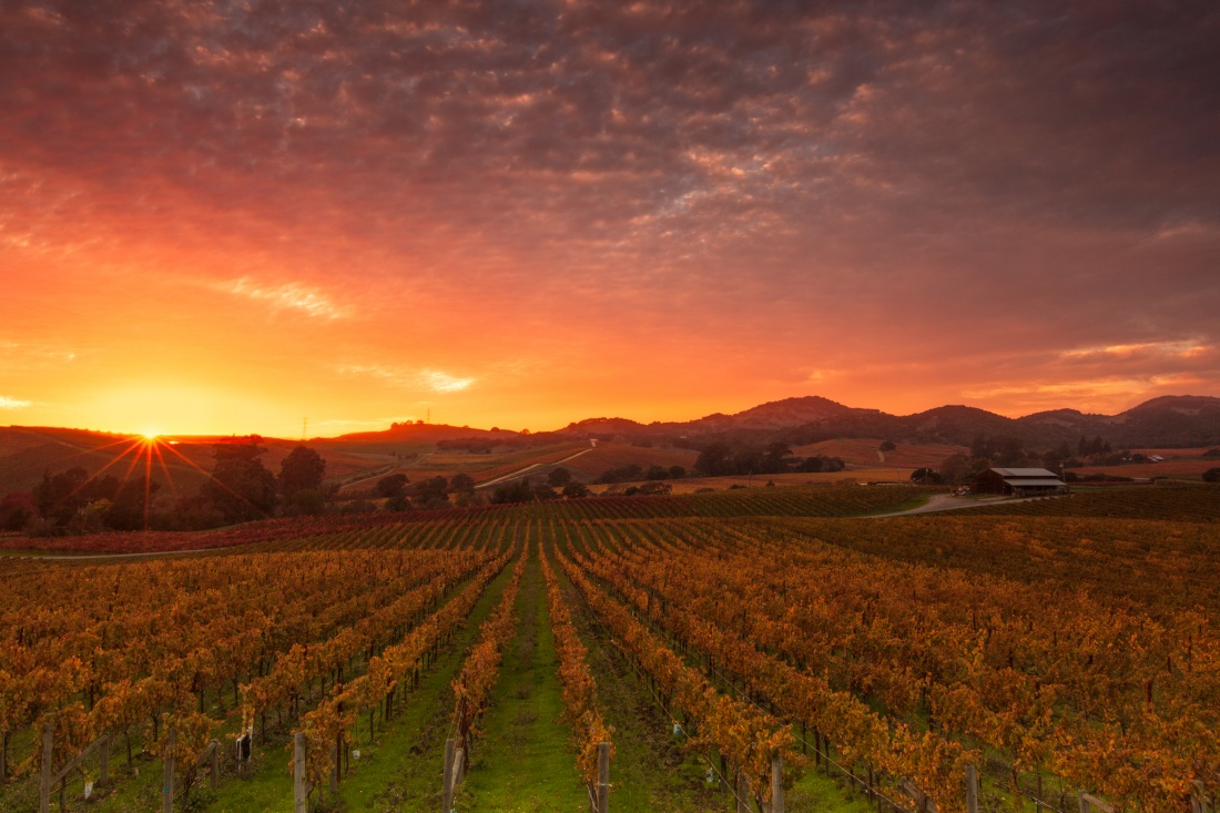 Napa Valley Travel Guide Image